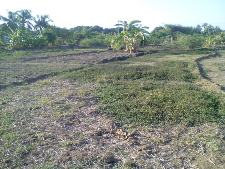 Our rented land.