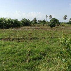 garden after corn