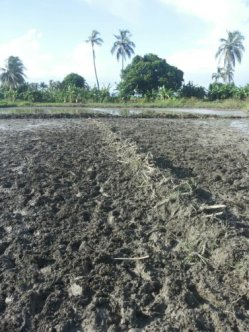 land for rice 3