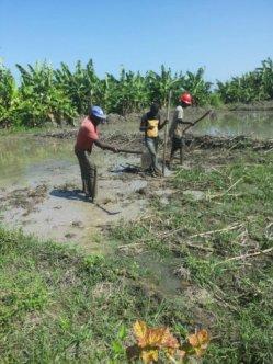preparing land 2