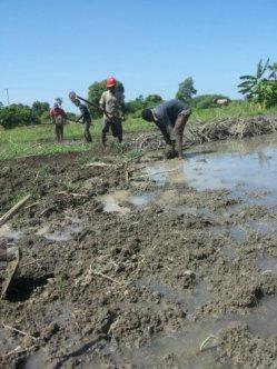 Preparing land
