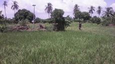Rice 6